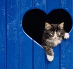 Cute Cats Are Beautiful People Desktop45